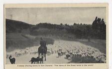 New Zealand, Sheep Droving Postcard, B244