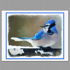 6 Blue Jay Wild Bird Blank Art Note Greeting Cards