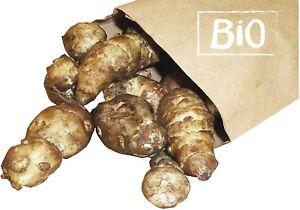 Bio Topinambur Knollen frisch 1kg