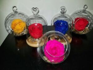 Eternal largue rose from Ecuador in a glass / colors: red, blue, purple, white..