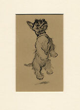 SCOTTISH TERRIER JUMPING LOVELY 1930'S CECIL ALDIN DOG ART PRINT READY MOUNTED