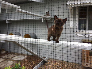 Cat Enclosure Netting 14m x 1.8m Low-Vis 19mm - FREE SHIPPING