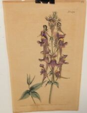 W.CURTIS OLD HAND COLORED FLORAL ENGRAVING