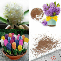 300pcs/lot Mixed Color Hyacinthus Orientalis Seeds Home Garden Plant Seed Decor
