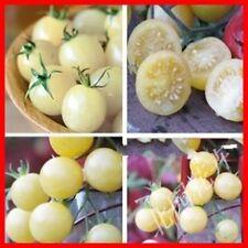 Vegetable seeds- YWhite Cherry Tomato