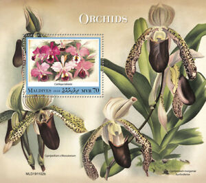 Maldives Flowers Stamps 2020 MNH Orchids Cattleya Orchid Flora Nature 1v S/S