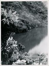 CONGO BELGE c. 1950 - Paysage Rives Lac Vert près du Ruwenzori - DIV 13034