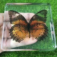 Beautiful butterfly specimens (Cethosia cyane)Real Insect Kids Educational Gifts