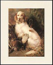ENGLISH SETTER GORDON SETTER LOVELY LITTLE DOG PRINT MOUNTED READY TO FRAME