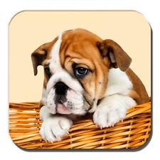 Bulldog Inglés Cachorro Posavasos Marrón Blanco Cachorro Cesto Crema Acrílico