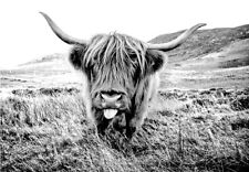 Highland Cow Scottish Farm Tongue Natural Black & White Quality Canvas Print