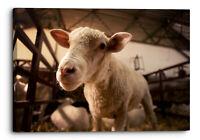 Sheep Lamb Stock Farming Domestic Canvas Wall Art Picture Home Decoration