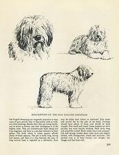 OLD ENGLISH SHEEPDOG VINTAGE DOG PRINT SKETCH PAGE ARTIST BRIDGET OLERENSHAW