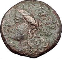 SYRACUSE SICILY 269BC Hieron II RARE R1 Ancient Greek Coin APOLLO & HORSE i61231