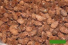Douglasie 30 Zapfen Deko Natur Herbst Winter Kranz Gesteck Basteln Floristik