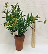 "Thistle Wild Flower Artificial Greenery Terra Cotta Style Pot Hallmark 18"" Tall"