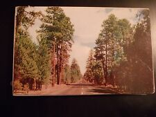 1958 POSTCARD OUR ROAD NORTHERN PONDEROSA PINE FORESTS TREES ARIZONA AZ