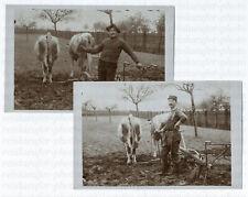 Stolze Franzosen am Kuh-Pflug, 2 Original-Photos, um 1920