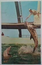 Marineland Florida Postcard Vtg Mid 1900s Feeding Time Jump Porpoise Dolphin
