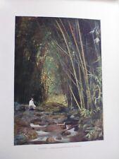 Tahiti/Moréa:Gravure 19°in folio couleur/ Foret de bambous (district de Taravao)