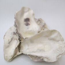 Oyster shell cluster natural decor nautical