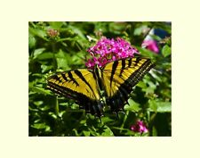 Yellow butterfly flowers matted picture interior wall decor fine art photograph