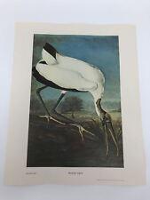 John James Audubon Folio Plate 247 Wood Ibis Limited 750