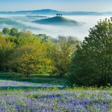 Bluebells & Colmer's Hill BBC Countryfile Range Blank Greeting Card