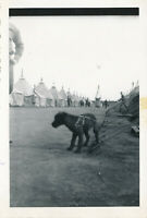 1940 WWII 121st FA WI Nat Guard maneuvers soldier's photo camp mascot dog