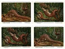 Pangolin, Pangolins, Scaly Anteaters, Animals 12 Modern Postcards