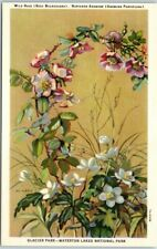 "Glacier-Waterton National Parks Linen Postcard Artist-Signed ""Wild Rose"" c1940s"
