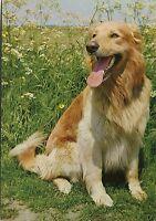 Alte Postkarte - Hund auf der Wiese