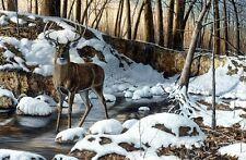 "Jim Hansel River Bottom Buck Deer Art Print  16"" x 12"""