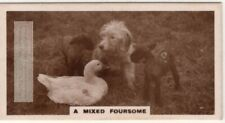1 Dog 1 Goose and 2 Sheep Lambs in a Field 1930s Trade Ad Card