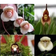 10PCS Brown Monkey Face Orchid Flower Decor Bonsai Plant Seeds Dracula Simia