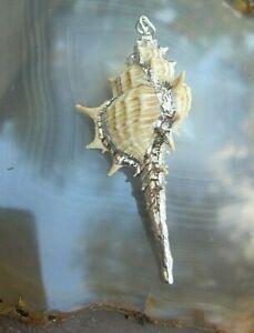 attraktiver anhänger echte gehörnte stachelschnecke mit silberakzent 5,6 cm