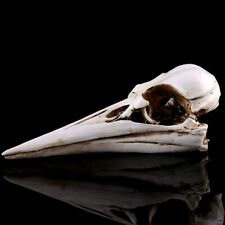 1 Pc Dinosaur Bird Skull Animal Creative Durable Skull Ornament for Gift Desktop