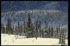 061043 árbol de esquí en Caribou montañas British Columbia A4 Foto Impresión