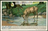 Aesop's Fable The Deer's Reflection  NICE 1920s Trade Ad Card