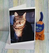 "Card: ""Tabitha, a Manchester Mackerel Tabby Cat"" #PeterBrighousePhotograph y"