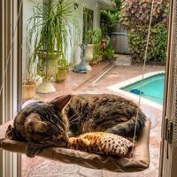 20KG Cat Basking Window Hammock Perch Cushion Bed Hanging Shelf Seat Mounted 1pc