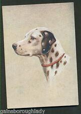 DALMATIAN DOG POSTCARD-DE RESZKE CIGARETTES-GODFREY PHILLIPS. No 17