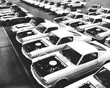 1965 Mustangs Waiting for Shelby Modifications 8 x 10 Photograph