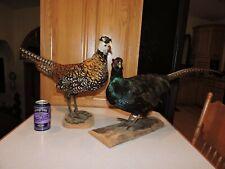Pheasant Bird Taxidermy for sale | eBay