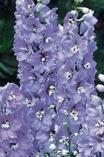 Delphinium Camelliard - Aprox 50 Semilla - Perenne