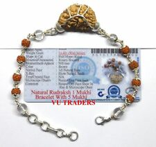 1 Mukhi Rudraksha Bracelet / Shiva Netra Bracelet - Lab Certified