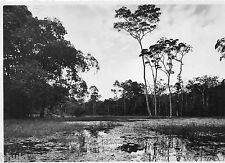 C033 Photo originale vintage Abidjan Côte d'ivoire marais arbres