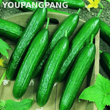 100 Pcs Seeds Cucumber Vegetables Japanese Jade Organic Garden Bonsai Plants New