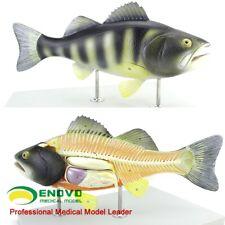 "50cm/22""Animal Fish 5-parts Plastic Perch Anatomical Model/Animal Anatomy model"