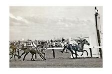 POLO PRINCE - 1964 Melbourne Cup winner modern Digital Photo Postcard